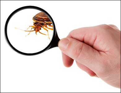 Finding best bed bug exterminator Toronto